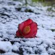今季初冠雪