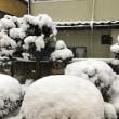 ホワイトアウトが一転銀世界に! 治療院の雪かきの後で雪だるまづくり