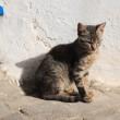 チュニジアのネコ その2