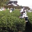 手摘み体験&茶工場見学へようこそ。