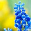 神様のデザイン 植物