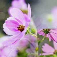 花彩々   秋雨