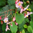 季節の訪れをしらせてくれる植物たち