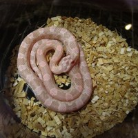 綺麗なヘビをもう一つ。