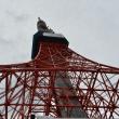 桜開花に合わせた東京タワーライトアップ