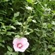 いま庭に咲いている花