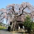 西光寺の枝垂れ桜