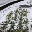 2月11日 雪が積もった!