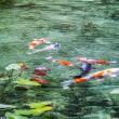 モネの池(名もない池)