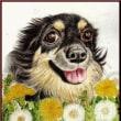 色鉛筆画384 (たんぽぽと犬)