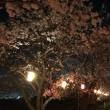 すこぼりの夜桜