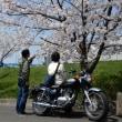 桜三昧です