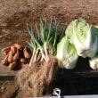 農園での野菜収穫のみでした。