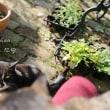 猫と仲良く日向ぼっこ