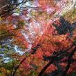 宮滝の紅葉