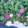 料亭の庭と梅雨の花々
