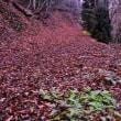 晩秋の林道
