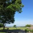 6月の社中央公園ー朝日と緑と青空の爽快