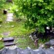 またまた雨です・・・