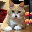 ♂猫だいずの便秘が再々発【猫日記こむぎ&だいず】2018 06 16