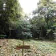 篠栗九大の森Ⅱ