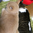 冬の風物詩『猫団子』わが家の串団子が完成しました
