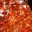秋は深まり....