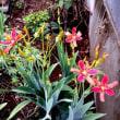 我家の庭と畑の野菜と花
