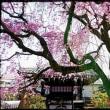 京都を巡る-15-