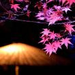 4481 庭の和傘