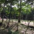 キャンプ10(3日目)