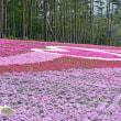 芝桜の里 ひらた&塙町風呂山公園ツツジ園・・・