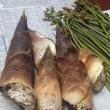 山菜の採り