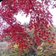 碓氷湖の紅葉(その4)