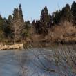 六甲山上にも春!!・・凍る池とネコヤナギ