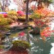 長野・善光寺東庭園の菊花展へ……!