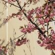 河津桜が4分咲き 3月12日(月)晴れ