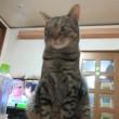猫とフラフープ記念日