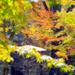 171113 かまど神社紅葉撮影7500歩ウオーキング!本殿付近見頃です!!