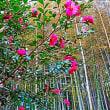 『城山散歩』 竹林