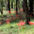 薄黄木犀 (ウスギモクセイ) の香り漂う昭和の森を歩く