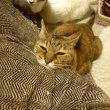 うちの猫の口内炎歯肉炎、対策サプリ