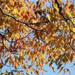 福岡城址で見かけた木の実、他