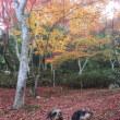 ワンコと福岡旅行  その6