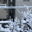 雪やこんこ・・・