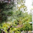 雨に濡れる葉(赤塚植物園)