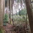 紅葉を見に金剛山へ行ったけど こんな植林だらけの里山の雑木林は既に落葉し冬景色でした その1