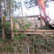 裏の杉林が伐採されました。