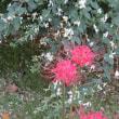 西方寺の彼岸花は四色揃い踏み