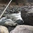 新緑の渓流!?